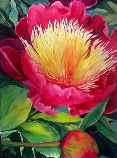 """Pink Peony Jewel"" watercolor by Julie Christopher"