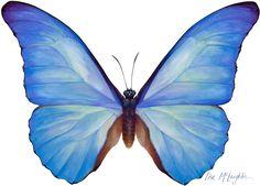 Lisa McLaughlin's detailed wildlife watercolors   exhibit