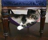 Kitty hammock!