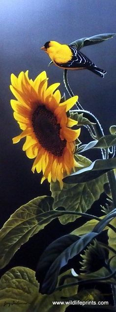 """The beautiful tall sunflower is getting paid a visit by the goldfinch in Jerry Gadamus' Sunshine.Image Size 9"""" x 22""""Signed and NumberedComes with Certificate of"""