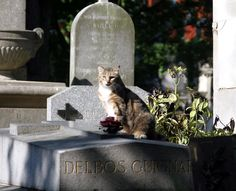 Lots of cats live at Père Lachaise