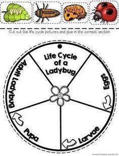 1x lot de 8 Happy LADY BUG en forme de Assiettes en Papier.