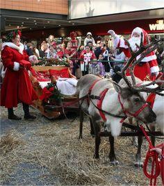 Reindeer, Sleigh & Santa