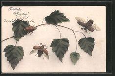 old postcard: AK Fröhliche Pfingsten!, Maikäfer und Birkenzweig