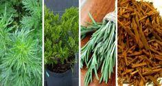 Arde măcar una dintre cele 10 plante și casa ți se va umple de energii pozitive! - Secretele.com Salvia, Herbs, Health, Feng Shui, Food, Decor, Plant, Decoration, Health Care
