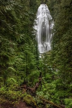 water falls deep in the woods