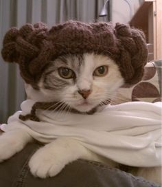 Help me Obi Wan Kenobi, you're my only hope.- Is what Tunanator's gonna say when I make her wear this!