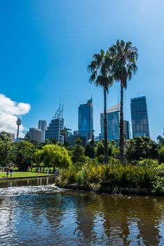 View of the CBD from Royal Botanic Gardens, Sydney, New South Wales, Australia - Wandering the World