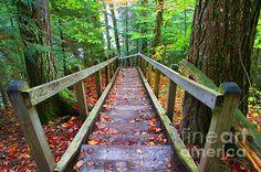 http://fineartamerica.com/featured/park-trail-michael-rucker.html
