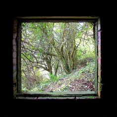 Escape to the Forest.Taken from inside an old derelict building on a pathway leading up to the top of Brean Down Somerset UK. The dark interior and glassless window serve as a perfect frame to the trees and greenery outside. #breandown #somerset #trees #nature #window #landscape #art #ukart #digitalart #natureart #jasongardnerconway #green