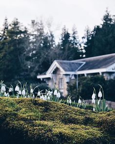 January details in the Botanics  Since Saturday Ive been listening to Martyn Bennetts albums on repeat! If youre into trad music & have favourites to share let me know below (playlist time!)  #storiesfromscotland See more from Scotland at http://laretour.com