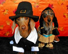 thanksgiving dachshund pilgrim & indian