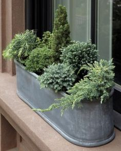 Outdoor Zinc Conifer Garden - How to Plant a Miniature Conifer Garden - via Martha Stewart