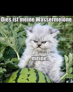 Meine Wassermelone! German is my favourite language.