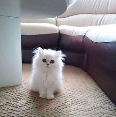 Kittens Cutest Baby, Cute Little Kittens, Cute Baby Cats, Cute Cats And Kittens, Cute Funny Animals, Cute Baby Animals, Pretty Cats, Beautiful Cats, Bb Chat