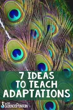 Here are 7 FUN ideas to teach your students about adaptations.  Include art, research, read alouds, video clips, Interactive Science Notebooks, animal observations, and stations for an EXCITING unit!  Includes FREE printables!