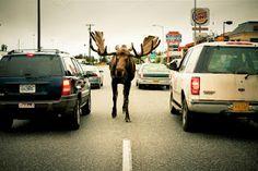 Anchorage AK-love the wild life