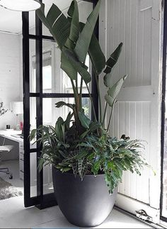 TIP - Tree Potting — Adam Robinson Design Giant house plantsGiant house plants Large Outdoor Planters, Outdoor Pots, Outdoor Gardens, Indoor Outdoor, Huge Houses, Modern Houses, House Plants Decor, Office Plants, Interior Plants