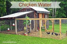 Life At Cobble Hill Farm: Chicken Water