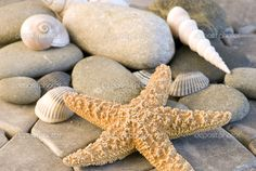 depositphotos_1525583-Starfish-and-shells.jpg (1023×685)