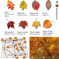 """#Repost @alstateparks with @repostapp.  A little something to get us ready for #Fallcolors. Visit @joewheelerstatepark @desotostatepark @lakegvillesp @oakmountainstatepark and Cheaha on the """"circle of colors"""" road trip. Third week of October will be close to peak. @alabamatravel @visitnorthal"""