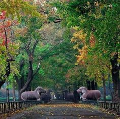 Yang Wu's photograph of the Divine Trail, built in Nanjing in the Ming Dynasty, Largest Countries, Countries Of The World, Places To Travel, Places To Visit, China People, China Travel, China Trip, Remote Viewing, Garden Park