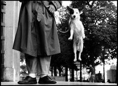 1stdibs | PARIS, FRANCE, 1989  Elliott Erwitt