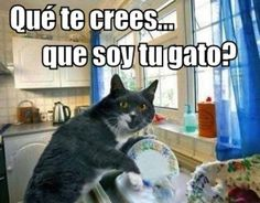 Lmao so punny Funny Animal Memes, Cat Memes, Funny Animals, Funny Cute, Hilarious, Mexican Memes, Funny Phrases, Spanish Memes, Funny Spanish
