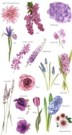 Types of colorful flowers