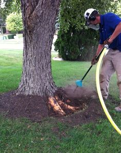 Rescuing Trees from Girdling roots. An air knife lets us blast soil and mulch away without harming roots. Tree Mulch, Mulch Around Trees, Landscaping Around Trees, Mulch Landscaping, Front Yard Landscaping, Landscaping Ideas, Garden Shrubs, Lawn And Garden, Shade Garden