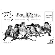 7 songbirds postcard, unmounted rubber stamp these precious 7 little birds sit nestled on a branch singing happily Vintage Labels, Vintage Ephemera, Vintage Cards, Graphics Vintage, Printable Vintage, Free Printable, Images Vintage, Vintage Pictures, Free Pictures