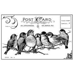 7 Songbird - unmounted Rubber Stp