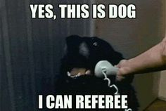 Yes, this is dog. I can referee #NFL #NBA #NHL