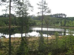 Lake in Finnskogen, Hedmark, Norway. To read and learn more about Finnskogen just click and follow this link: https://en.wikipedia.org/wiki/Finnskogen