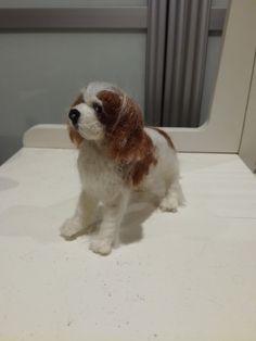 Cavalier Kingcharlesin spanieli Cavalier, Dogs, Animals, Animales, Animaux, Pet Dogs, Doggies, Animal, Animais