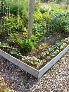 """Sylvia says, """"We hope to have our garden look more like this one with more vegetables then weeds and mulched around the periphery to keep weeds and grass from migrating into the growing area."""" She's a mom at Evansdale Elementary School in Atlanta, GA #diggingdeeper"""