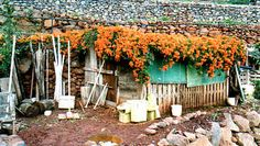 flower covered roof in Agulo - La Gomera