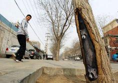 Peintures sur arbres par Wang Yue Photo