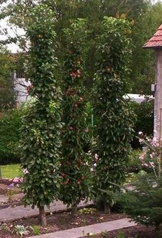 Säulenobst im Garten