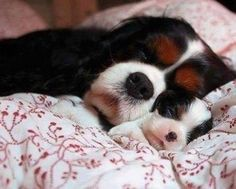 Mother and puppy having a snooze