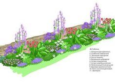 Схемы клумб непрерывного цветения из многолетников - варианты посадки цветов