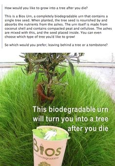 LOVE this idea <3  -- I want my daughter's to pick out what type of tree and where they would like it placed.