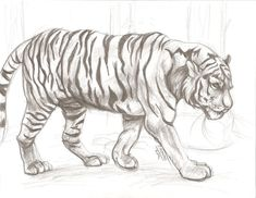Exciting Learn To Draw Animals Ideas. Exquisite Learn To Draw Animals Ideas. Easy Animal Drawings, Pencil Art Drawings, Animal Sketches, Easy Drawings, Drawing Sketches, Drawing Animals, Drawing Ideas, Tiger Drawing, Animal Tumblr