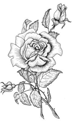 Ideas For Tattoo Flower Drawing Adult Coloring Coloring Book Pages, Coloring Sheets, Wood Burning Patterns, Printable Coloring, Pyrography, Colorful Pictures, Art Drawings, Rose Drawings, Drawing Drawing