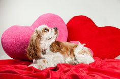 Dogs for Kids: A Guide to Adding Another Family Member - click on photo to read more -