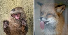 20+ Animals Licking Glass That Have No Idea How Silly They Look | Bored Panda