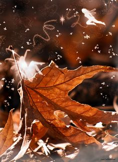 Dance of the Maple Fairies by Sue  Cullumber I luv autumn it always feels so magical for me!