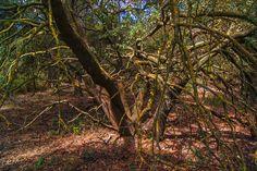 bosque en mariola