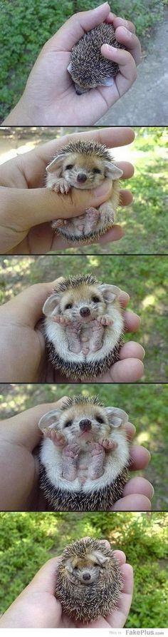 schattig baby egeltje....