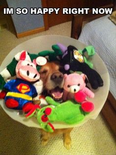 Totally should have done this to Toby ehen he had his cone lol.Funny Pictures Of The Day – 112 Pics